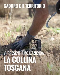 Lancio Collina Toscana dal 19 luglio al  25 luglio