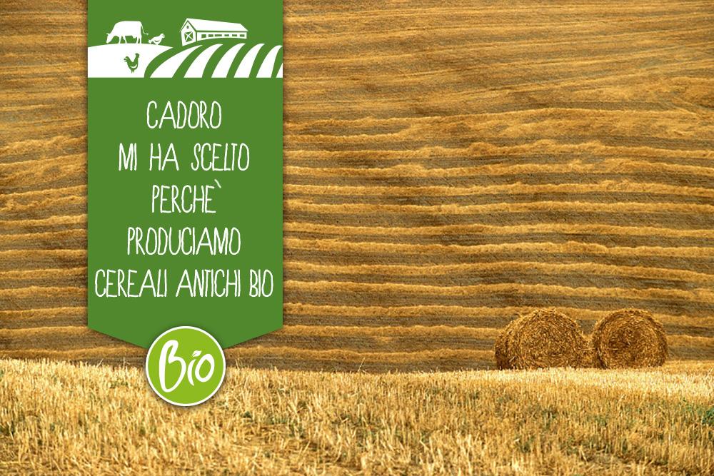 Azienda Agricola Agribosco