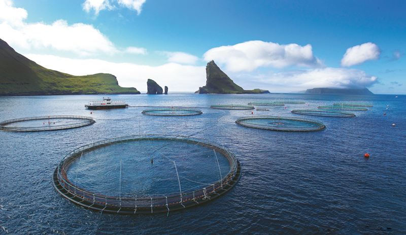 Cadoro vi porta le Isole Faroe sulla tavola!