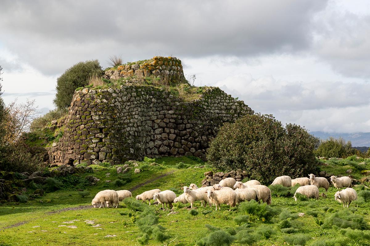 Agnello di Sardegna e d'Alpago, due eccellenze per la tua Pasqua