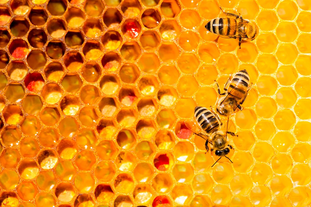 Miele: il nettare degli Dei