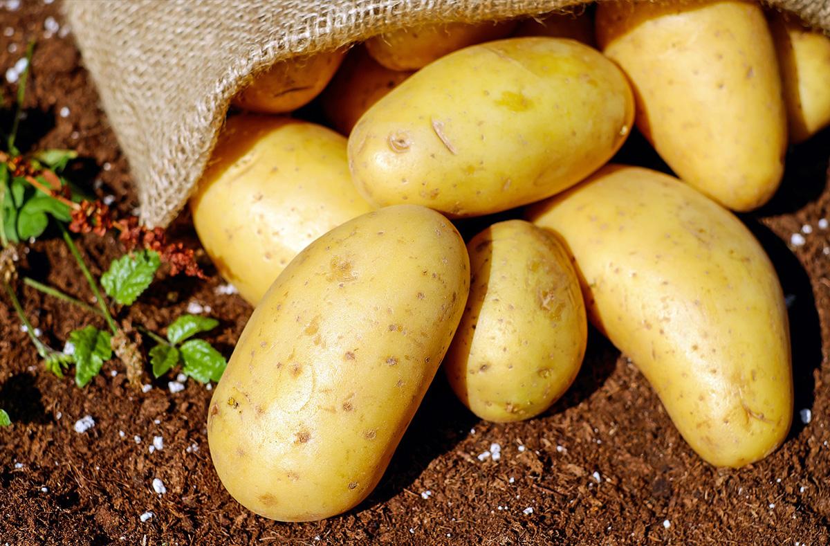 Diverse tipologie di patate per diversi usi in cucina: gialle, rosse e bianche