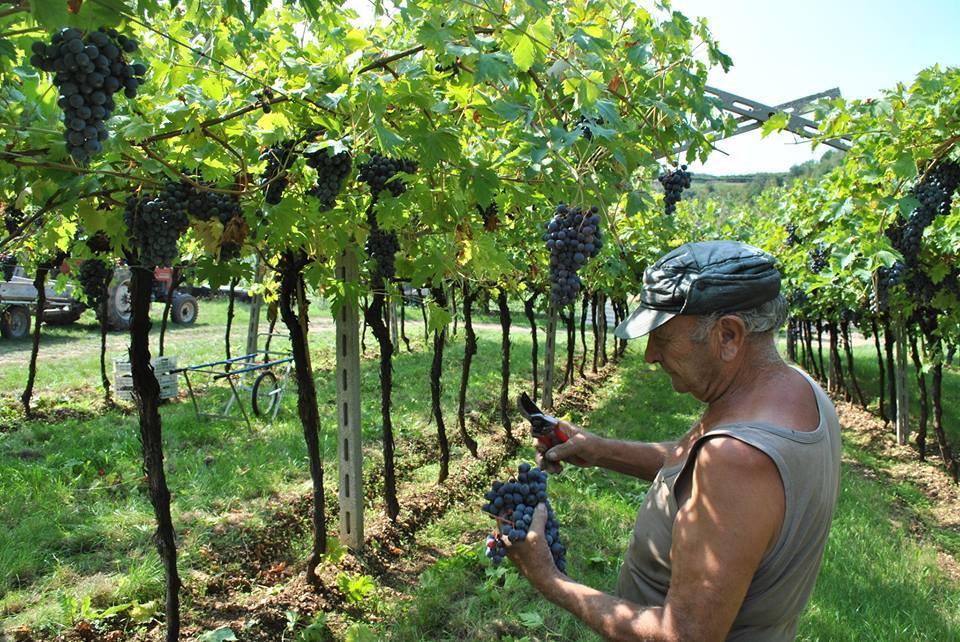 DegustiAMO il vino della Cantina Valpolicella Negrar!
