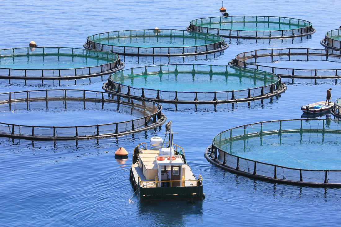 Dall'acqua al piatto: la sostenibilità Cadoro incontra anche la pesca.